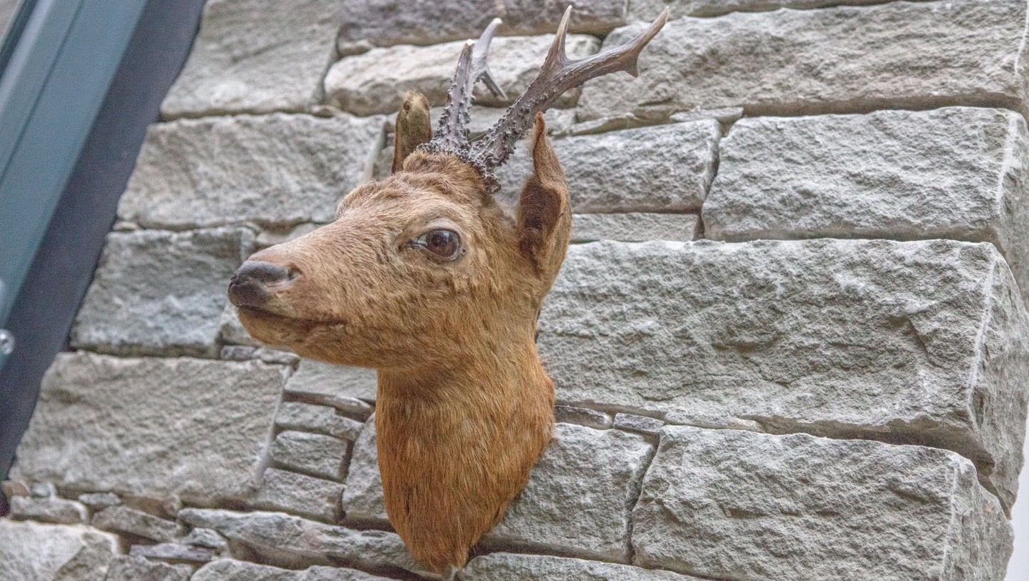 Deer on wall